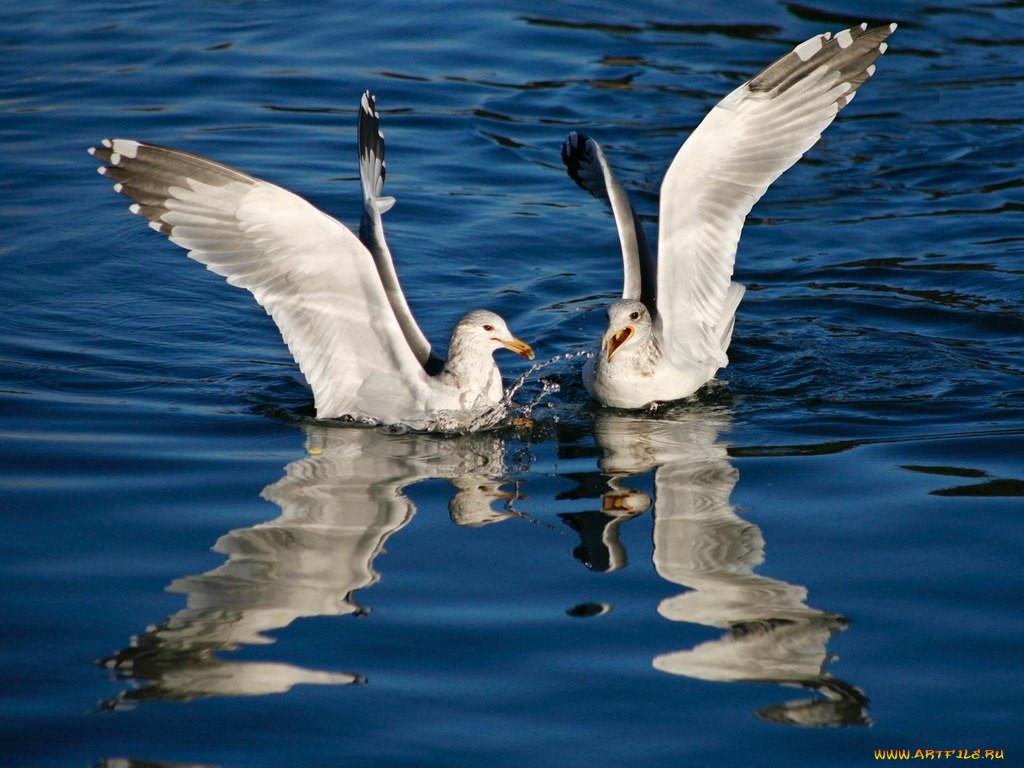 эвенкии зима чайка и баклан на одном фото фотообоев брянске объяснима